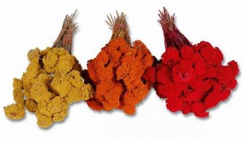trockenblumen deko trockenblumen kaufen zum basteln