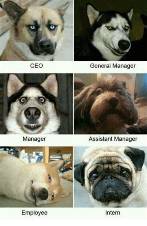 assistant memes 25 best memes about assistant manager assistant manager