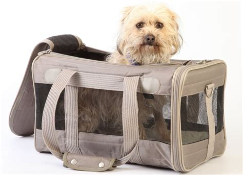 puppy carriers 11 of the best travel carriers for dogs