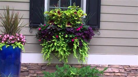 hanging window flower boxes beautiful window boxes and hanging baskets 2011 1 5 min
