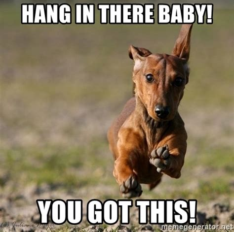 Hang In There Meme - hang in there meme gallery