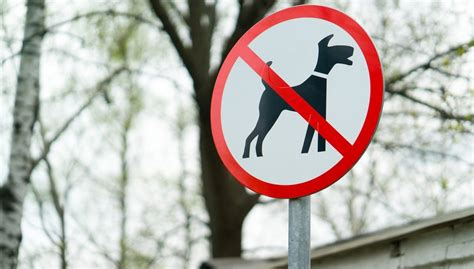 banned breeds 13 banned breeds and tips to prevent aggressive behavior couture country