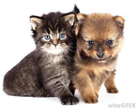 images of puppies and kittens why do dogs cats with pictures