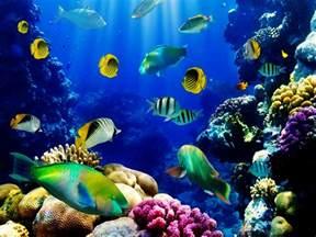 Under The Sea Wall Mural fish aquarium wallpaper wallpapersafari epic car
