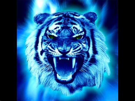 chinese astrology water tiger youtube