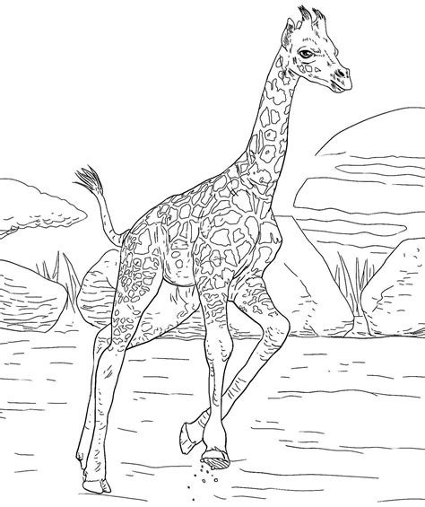 giraffe eating coloring pages bible coloring pages fishes and loaves of bread coloring