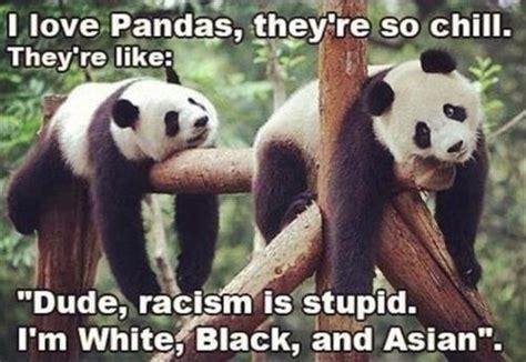 Funny Panda Memes - panda meme just for laughs pinterest meme and pandas