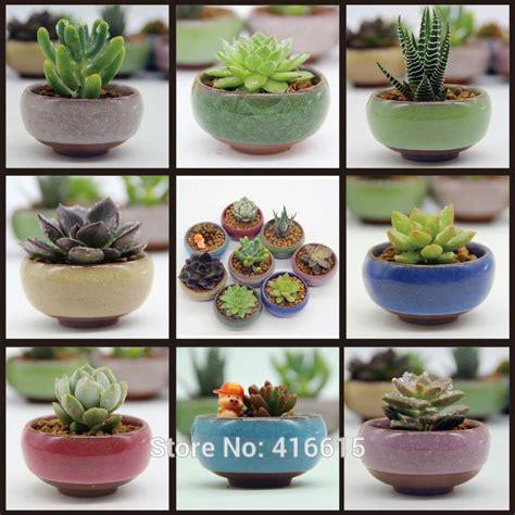 aliexpress com buy small potted bonsai mini succulent aliexpress com buy 8pcs lot microlandschaft mini