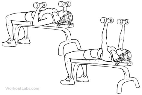 flat bench press with dumbbells dumbbell flat bench press workoutlabs