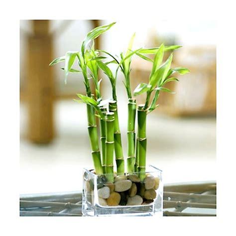 piante per casa piante piante appartamento scegliere le piante