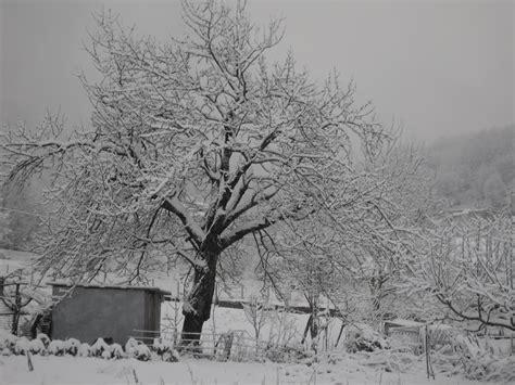 cosenza sabato il simposio quot calabria maltempo forti nevicate sino a bassa quota