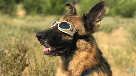 dogs and solar eclipse our pets also react to solar eclipses health thoroughfare
