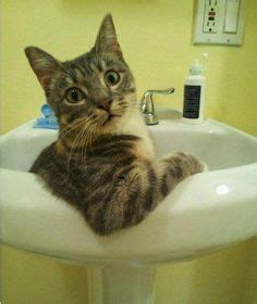wastafel kitten 125 best cat cute and funny photo and illustration