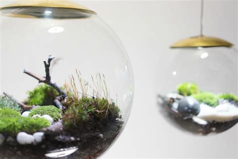 led lights for terrarium these amazing terrarium ls grow plants in even the