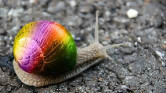 Hermaphroditic snail named to honor same sex marriage truth revolt