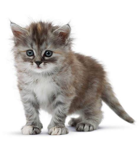 chat on choisir un chaton