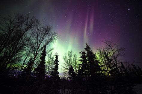 healy alaska northern lights northern lights taken in healy alaska daniel