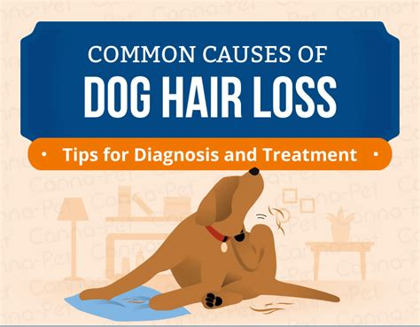 home remedys for dogs losing hair dog hair loss common causes treatment canna pet