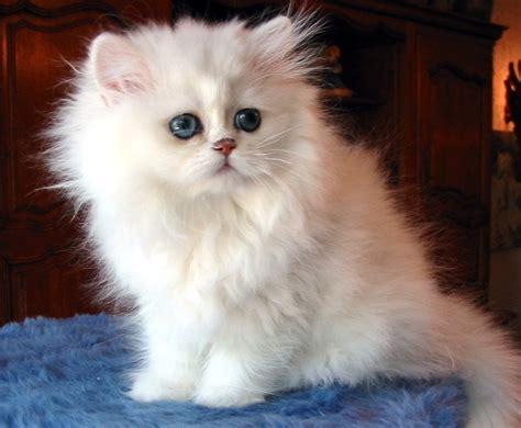 toda la informaci 243 n sobre tankard en colombia factor metal fotos de gatos gnewsinfo