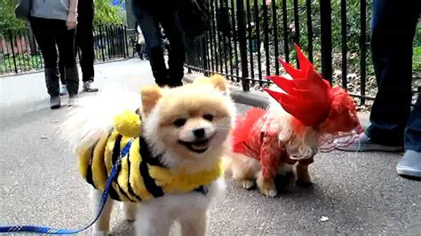 Dress It Up Button Puppy Parade tompkins square park parade