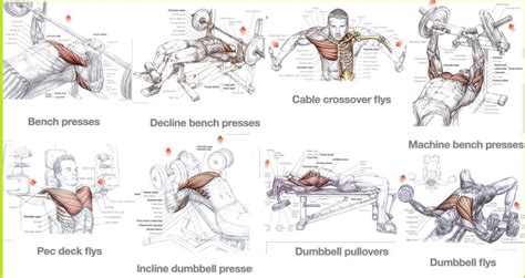 best chest exercises for mass for size all