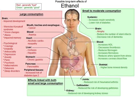 Does Alcholo Effect Detox From by Term Effects Of Ethanol Free Health