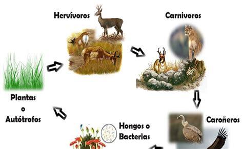 cadena alimenticia la animales estepa cadena alimenticia