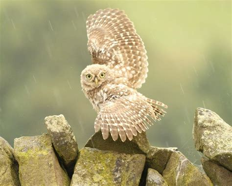 19 best images about owls on pinterest owls owl and pinterest