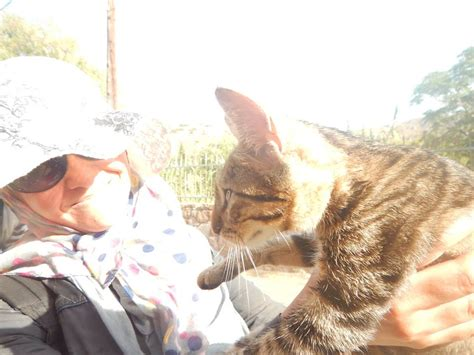 syrian refugees flee the war together with their pets keep talking greece