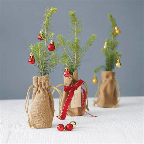 little norway spruce christmas tree contemporary