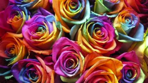 rainbow colored roses how to make rainbow roses a step by step guide