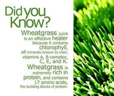 Wheatgrass Detox Side Effects by 1000 Images About Wheatgrass Chlorella On