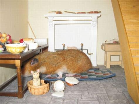 hamster house hamster house 5 pics