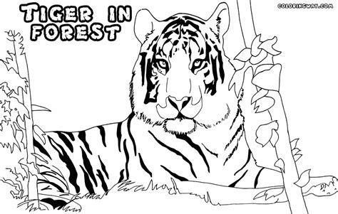 tiger woods coloring page tiger woods coloring pages coloring pages