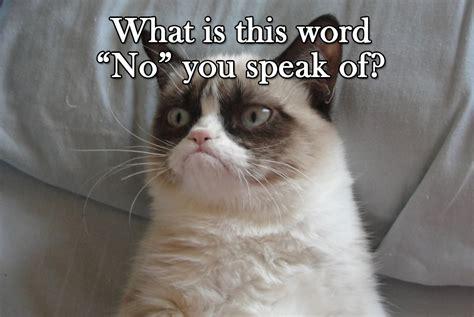 Original Grumpy Cat Meme - no grumpy cat know your meme