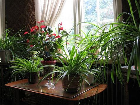 Plants In House | indoor plants important part of interior design www