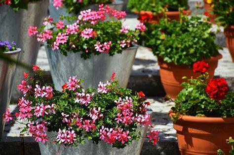 como decorar plantas con macetas consejos para llenar tu casa de plantas en macetas vivir
