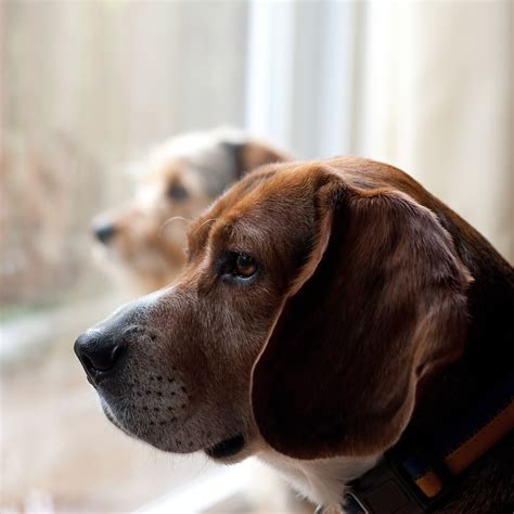 helping dogs with separation anxiety how to help your pet deal with separation anxiety fetch pet care