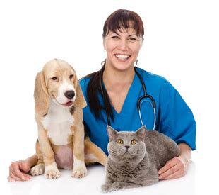 whittier dog cat hospital animal hospital licensed underwood veterinary hospitals columbus ohio underwood