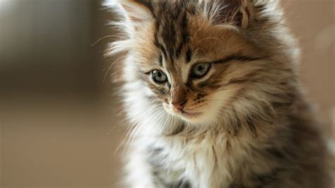 Cat Wallpapers 1920×1080 (58 Wallpapers) ? Adorable Wallpapers