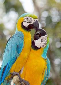 top 9 macaw facts rainforest cruises