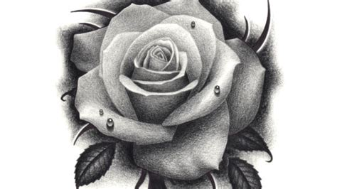black and grey rose drawing black colored pencil rose