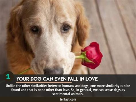 10 Facts About Dogs by Top 10 Interesting But Untold Facts About Dogs