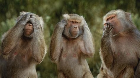 monkey wallpaper for walls monkey wallpaper 25500 1920x1080 px hdwallsource com
