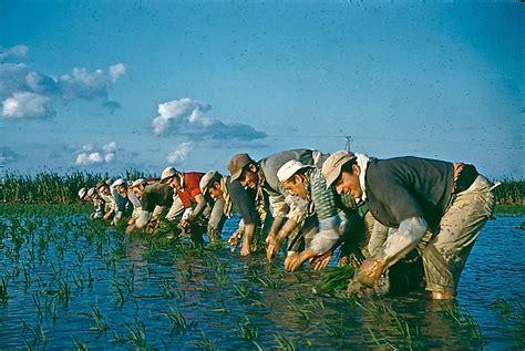 maison du riz in albaron discover the rice culture in camargue
