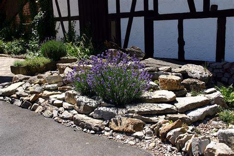 lavendel im garten überwintern lavendel im ger 246 llbeet foto bild landschaft garten