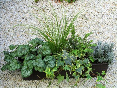 Pflanzen Versand by Bepflanzter Balkonkasten 60 Cm Wintergr 252 N Pflanzen