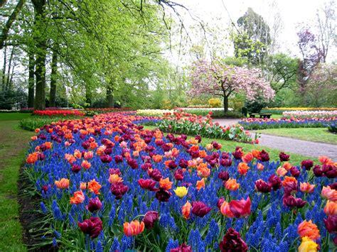 colorful keukenhof gardens holland world  travel