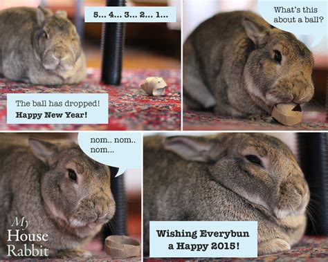 new year 2015 for the rabbit happy new year from my house rabbit my house rabbits bunny