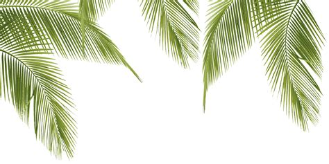 leaf pattern png translate palm leaves from english to vietnamese lingua fm